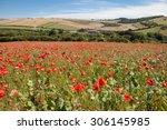 Poppy Field In South Downs Way...
