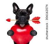 Valentines french bulldog dog...