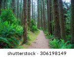 Hiking Trail In Fern Canyon In...