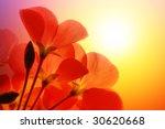 Red Flower Macro Over White...