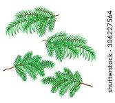 sprigs of spruce christmas... | Shutterstock .eps vector #306227564