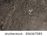 Skull In The Ground