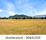 Field Of Long Dry Grass In...