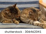 friendship of the two striped... | Shutterstock . vector #306462041