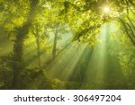 Rays Of Sunlight And Green...