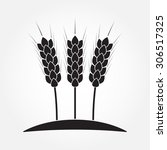 wheat ears or rice icon.... | Shutterstock .eps vector #306517325