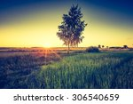 vintage photo of green field... | Shutterstock . vector #306540659