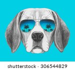 Portrait Of Beagle Dog With...