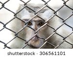 Monkey Eye  Sad Expression In A ...
