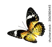 Flying Leopard Lacewing...