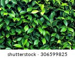 Green Leaves Wall Background...