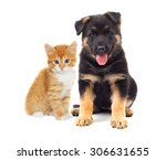 Stock photo kitten and puppy looking on a white background 306631655