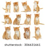 Stock photo set of kittens 306631661