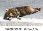 dead raccoon on street - stock photo