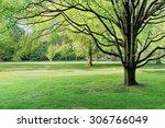 Lush Green Tree In City Park ...