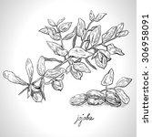 monochrome image of jojoba... | Shutterstock .eps vector #306958091