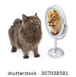 conceptual image of a cat... | Shutterstock . vector #307038581