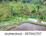 balinese rice terraces... | Shutterstock . vector #307041707