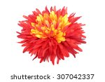 red with yellow daisy head... | Shutterstock . vector #307042337