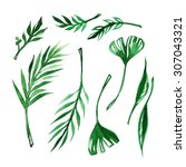 leaves of palm frond green... | Shutterstock . vector #307043321