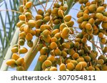 Bunch Of Yellow Dates On A Palm ...