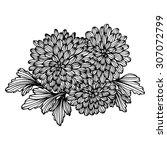 elegant bouquet with... | Shutterstock .eps vector #307072799