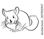 an image of a chinchilla. | Shutterstock .eps vector #307092947