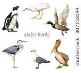 Illustration Of Water Birds ...