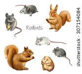 Illustration Of Rodent Animals...