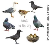 Birds That Live With Us In The...