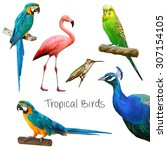 Illustration Of Tropical Birds...