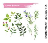 watercolor illustration of...   Shutterstock . vector #307309415