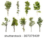 collection of isolated tree on... | Shutterstock . vector #307375439
