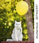 Stock photo british shorthair cat holding a yellow balloon 307442597