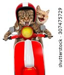 two funny cats are driving a... | Shutterstock . vector #307475729
