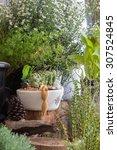 Little Garden Vintage In Home...