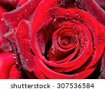 Drops Of Water On The Rose....