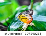 Butterfly Perched On A Leaf