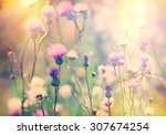 Flowering  Blooming Thistle  ...