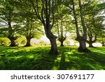 sunny forest in the spring | Shutterstock . vector #307691177