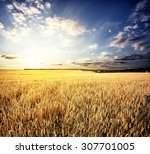 Golden Wheat Field Under A...