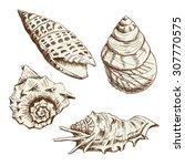 set of seashells. hand drawing... | Shutterstock . vector #307770575