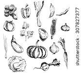 hand drawn vegetables set.  | Shutterstock . vector #307827377