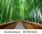 path to bamboo forest ... | Shutterstock . vector #307843631