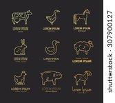 vector line logo set with... | Shutterstock .eps vector #307900127