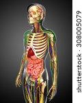 illustration of lymphatic ... | Shutterstock . vector #308005079