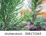 christmas tree  | Shutterstock . vector #308172365