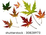 many different autumn leaves... | Shutterstock . vector #30828973