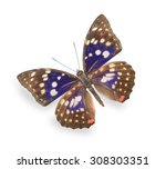 Stock photo beige and blue butterfly isolated on white 308303351