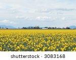 Spring Landscape. Yellow...
